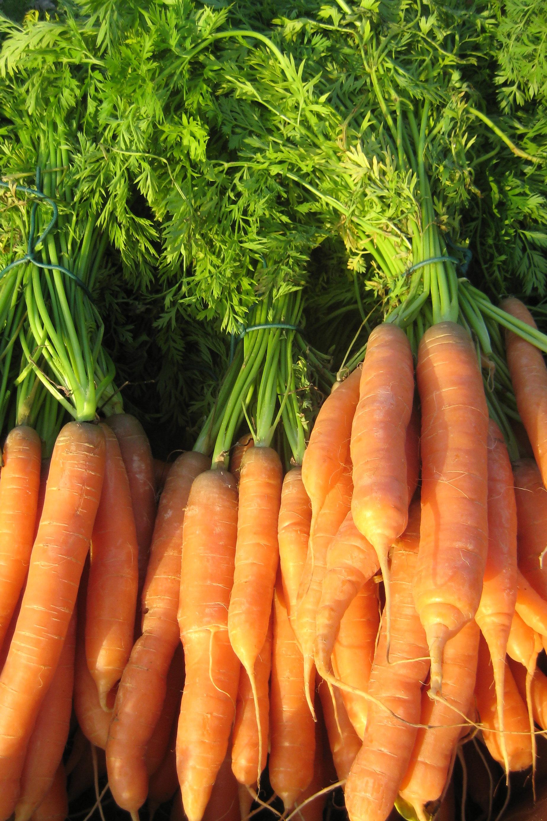 M hre karotte wurzeln gesundes gem se - Karotten kochen ...